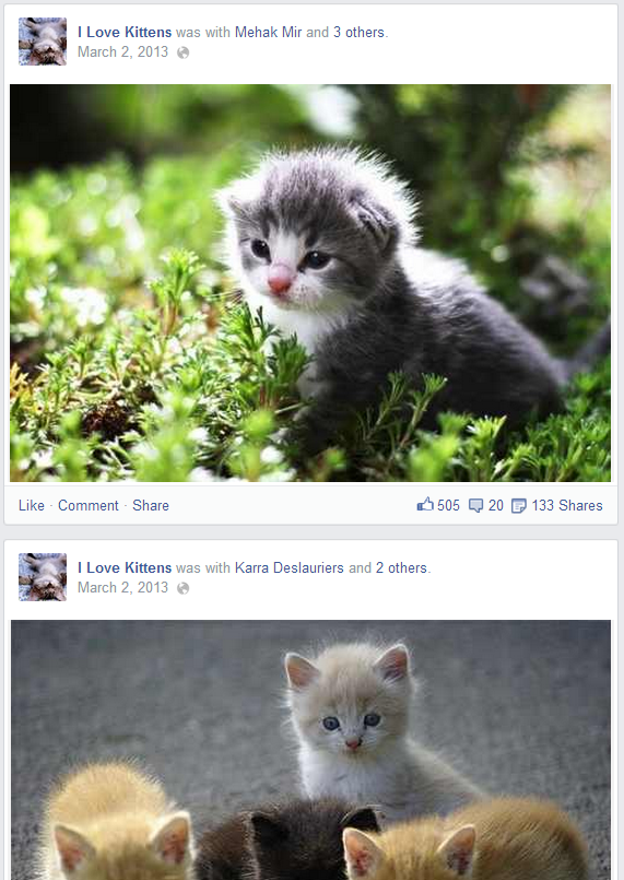 photo 2kittens_zps1044b575.png