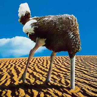 Ostrich Burying Head In The Sand