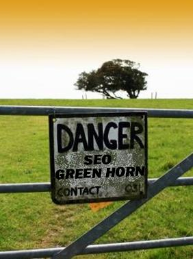 Am I an SEO Greenhorn?