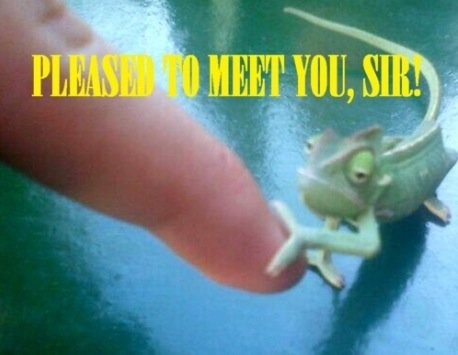 please to meet you