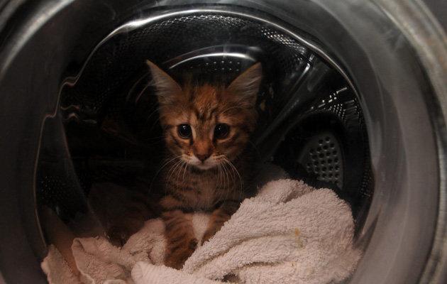 Kitten in a washing machine